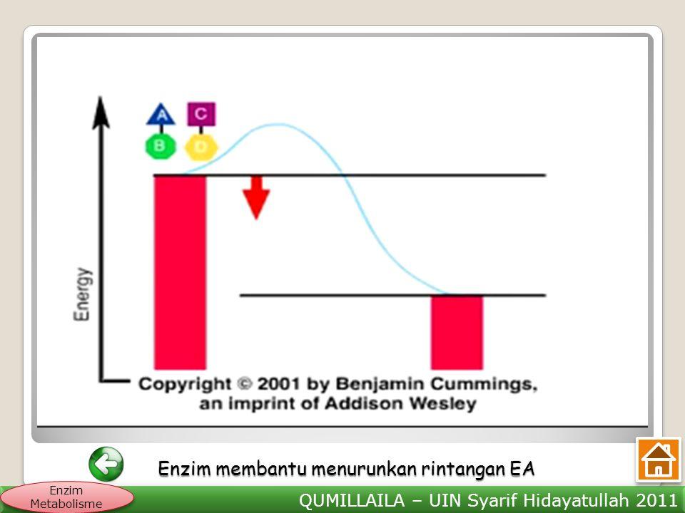 QUMILLAILA – UIN Syarif Hidayatullah 2011 Enzim Metabolisme Enzim membantu menurunkan rintangan EA Enzim membantu menurunkan rintangan EA