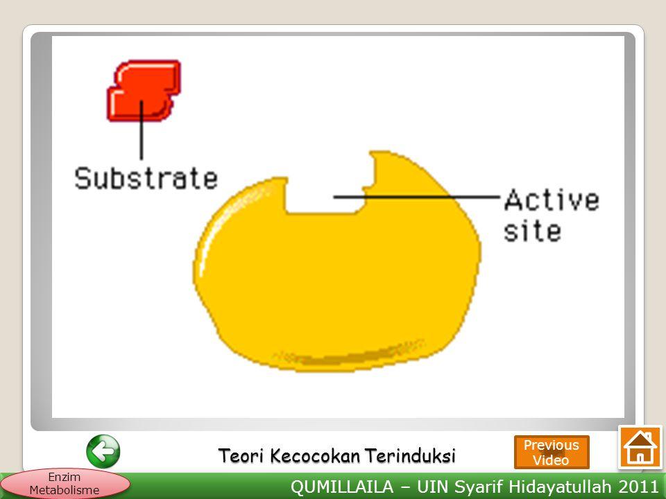QUMILLAILA – UIN Syarif Hidayatullah 2011 Enzim Metabolisme Teori Kecocokan Terinduksi Teori Kecocokan Terinduksi Previous Video