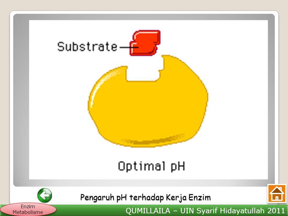 QUMILLAILA – UIN Syarif Hidayatullah 2011 Enzim Metabolisme Pengaruh pH terhadap Kerja Enzim Pengaruh pH terhadap Kerja Enzim