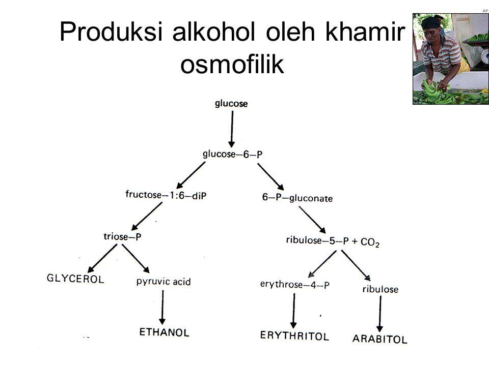 Produksi alkohol oleh khamir osmofilik