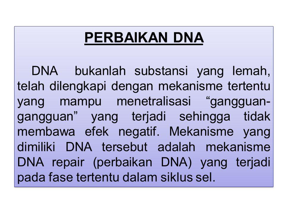 """PERBAIKAN DNA DNA bukanlah substansi yang lemah, telah dilengkapi dengan mekanisme tertentu yang mampu menetralisasi """"gangguan- gangguan"""" yang terjadi"""