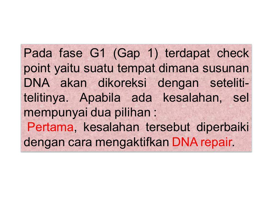 Pada fase G1 (Gap 1) terdapat check point yaitu suatu tempat dimana susunan DNA akan dikoreksi dengan seteliti- telitinya. Apabila ada kesalahan, sel