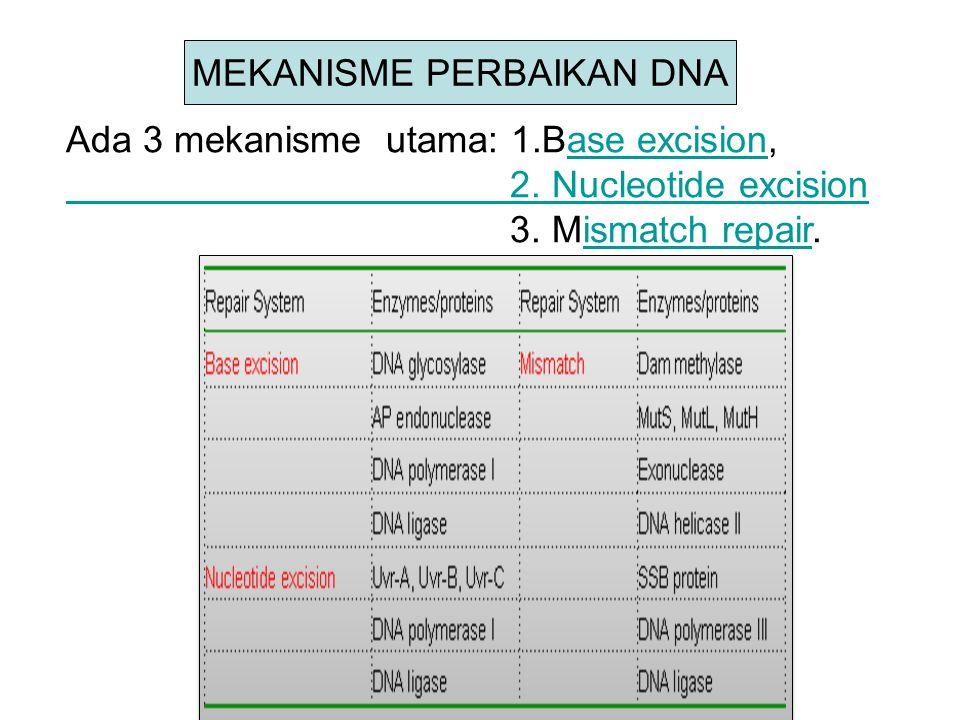 Base excision (Pemotongan Basa) Basa-basa DNA dapat dirusak melalui deamination atau alkylation.