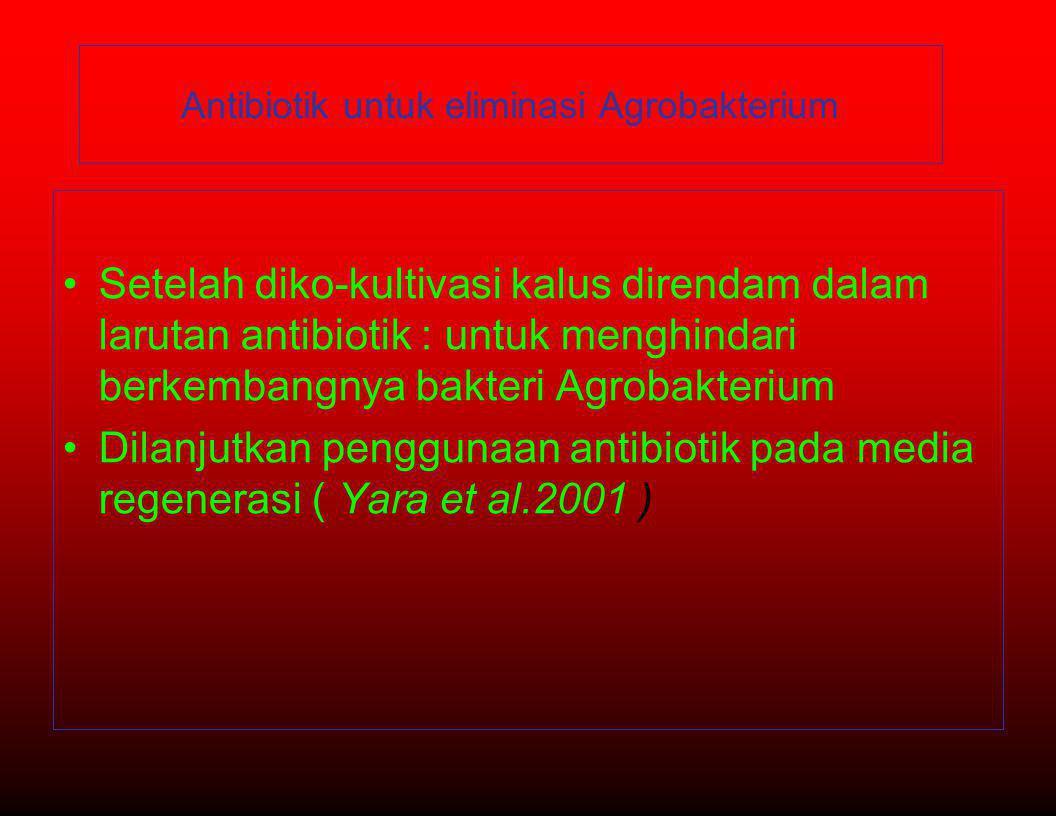 •Setelah diko-kultivasi kalus direndam dalam larutan antibiotik : untuk menghindari berkembangnya bakteri Agrobakterium •Dilanjutkan penggunaan antibiotik pada media regenerasi ( Yara et al.2001 ) Antibiotik untuk eliminasi Agrobakterium