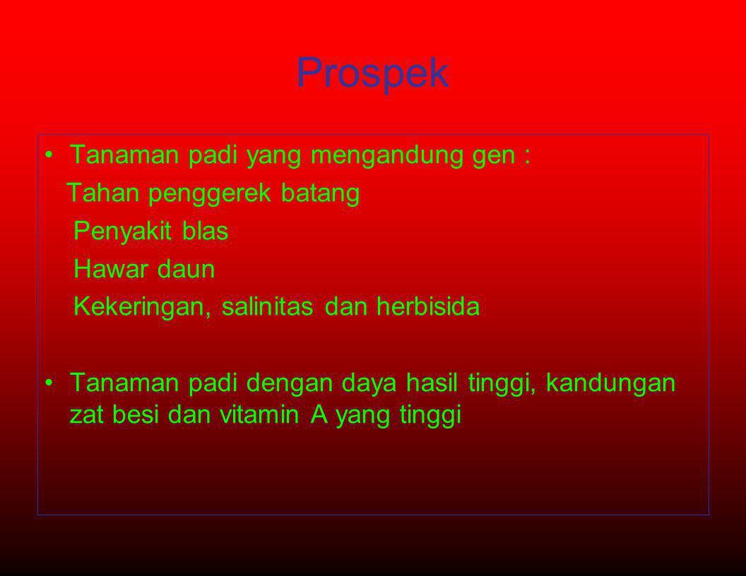 Prospek •Tanaman padi yang mengandung gen : Tahan penggerek batang Penyakit blas Hawar daun Kekeringan, salinitas dan herbisida •Tanaman padi dengan d