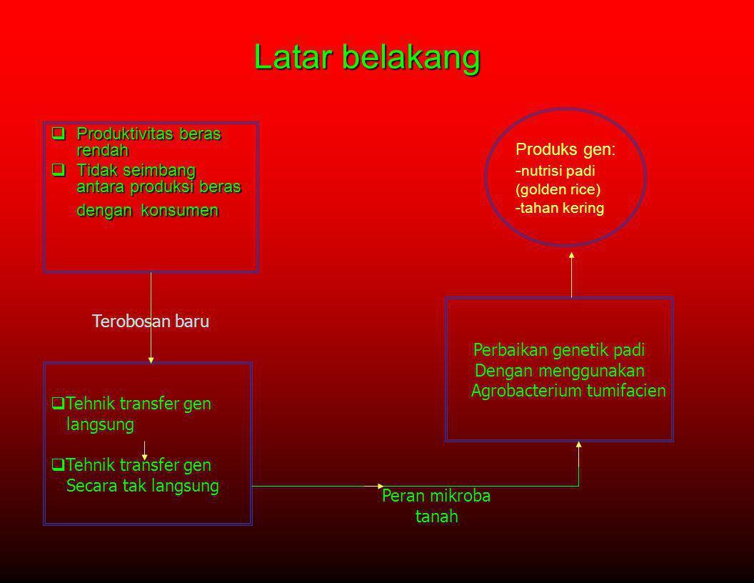 Bahan Penyeleksi •Higromisin(hpt), fostinotrisin (bar) (Hiei et al.1994;rashid et al.