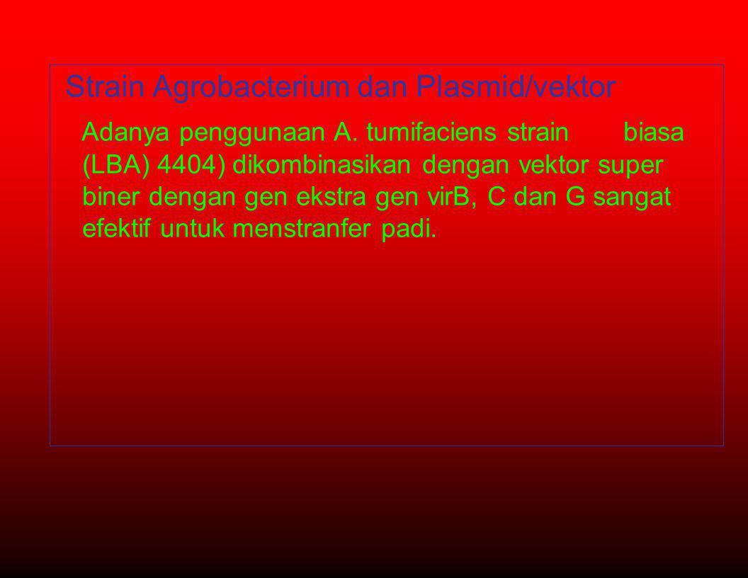 •Strain Agrobacterium dan Plasmid/vektor - Adanya penggunaan A.