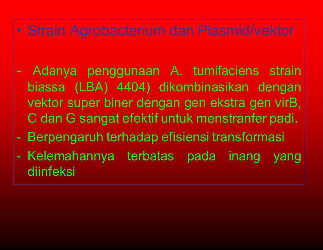 •Strain Agrobacterium dan Plasmid/vektor - Adanya penggunaan A. tumifaciens strain biassa (LBA) 4404) dikombinasikan dengan vektor super biner dengan