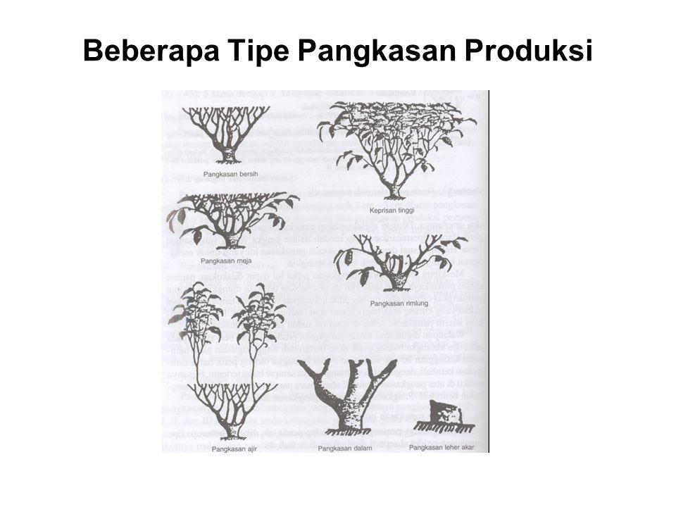 Beberapa Tipe Pangkasan Produksi