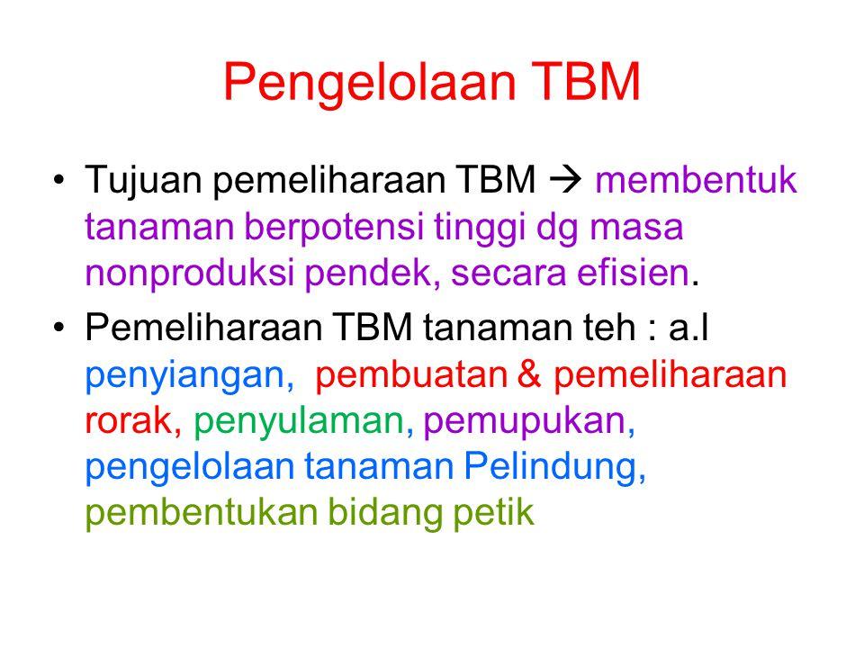 Pengelolaan TBM •Tujuan pemeliharaan TBM  membentuk tanaman berpotensi tinggi dg masa nonproduksi pendek, secara efisien. •Pemeliharaan TBM tanaman t