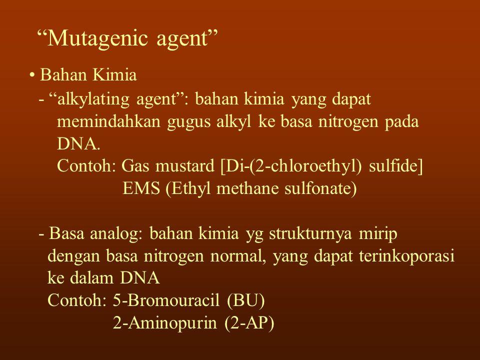 """""""Mutagenic agent"""" • Bahan Kimia - """"alkylating agent"""": bahan kimia yang dapat memindahkan gugus alkyl ke basa nitrogen pada DNA. Contoh: Gas mustard [D"""