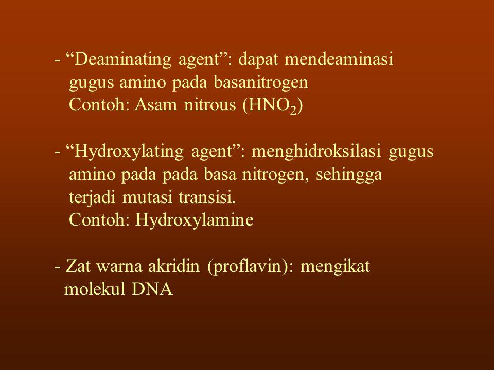 "- ""Deaminating agent"": dapat mendeaminasi gugus amino pada basanitrogen Contoh: Asam nitrous (HNO 2 ) - ""Hydroxylating agent"": menghidroksilasi gugus"