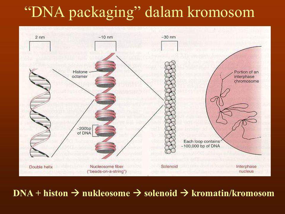 DNA - Gen Gen dapat digambarkan sebagai segmen molekul DNA yang berisi kode untuk sekuens asam amino dari suatu rantai polipeptida (protein)
