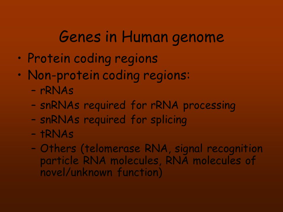 Genes in Human genome •Protein coding regions •Non-protein coding regions: –rRNAs –snRNAs required for rRNA processing –snRNAs required for splicing –
