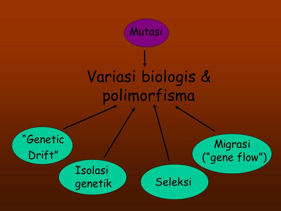 """Variasi biologis & polimorfisma """"Genetic Drift"""" Mutasi Migrasi (""""gene flow"""") Seleksi Isolasi genetik"""