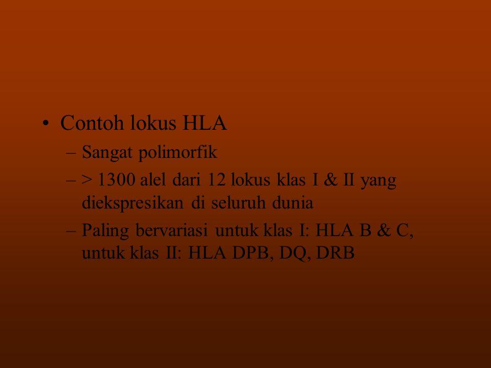 •Contoh lokus HLA –Sangat polimorfik –> 1300 alel dari 12 lokus klas I & II yang diekspresikan di seluruh dunia –Paling bervariasi untuk klas I: HLA B