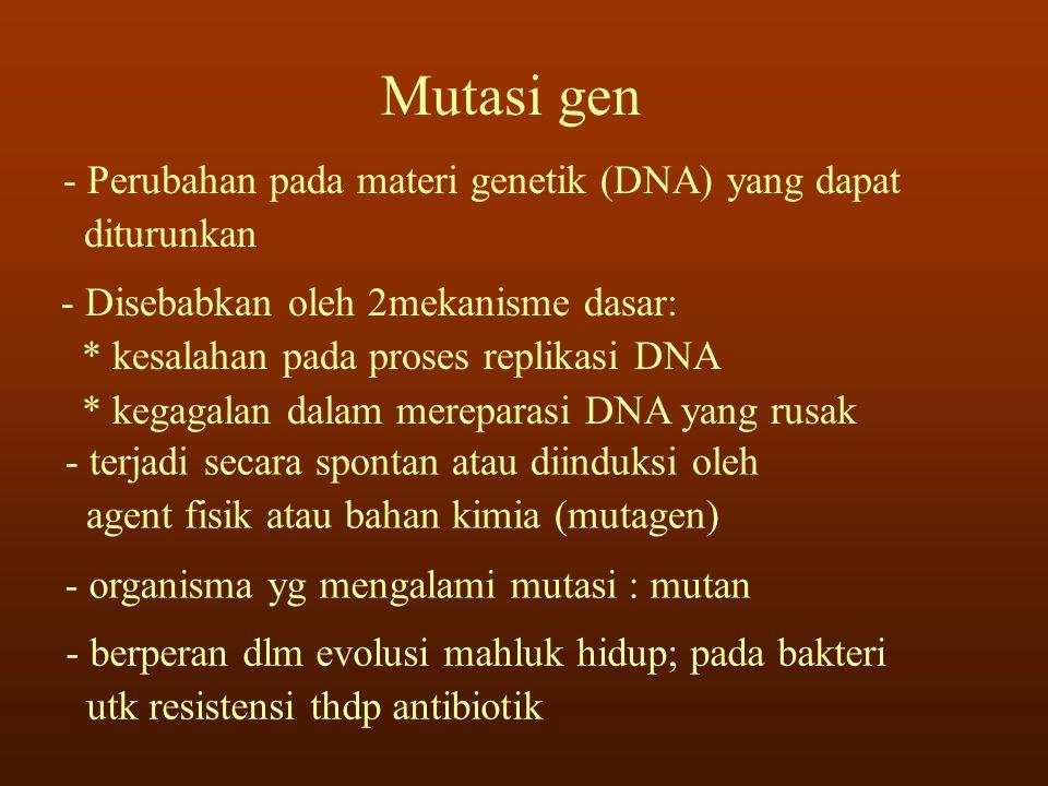 Mutasi gen - Perubahan pada materi genetik (DNA) yang dapat diturunkan - Disebabkan oleh 2mekanisme dasar: * kesalahan pada proses replikasi DNA * keg
