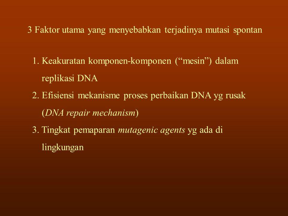 """3 Faktor utama yang menyebabkan terjadinya mutasi spontan 1. Keakuratan komponen-komponen (""""mesin"""") dalam replikasi DNA 2. Efisiensi mekanisme proses"""
