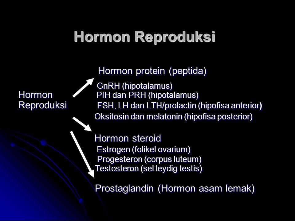 Fungsi Hormon Reproduksi (Hipotalamus) GnRH : Merangsang produksi dan sekresi FSH dan LH dari hipofisis anterior dan LH dari hipofisis anterior PRH : Merangsang produksi dan sekresi hormon prolaktin/LTH hormon prolaktin/LTH PIH : Menghambat produksi dan sekresi hormon prolaktin hormon prolaktin