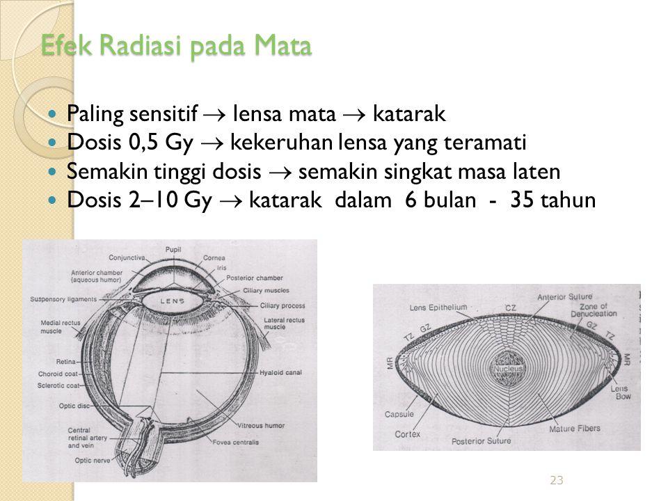 Efek Radiasi pada Mata  Paling sensitif  lensa mata  katarak  Dosis 0,5 Gy  kekeruhan lensa yang teramati  Semakin tinggi dosis  semakin singkat masa laten  Dosis 2–10 Gy  katarak dalam 6 bulan - 35 tahun 23