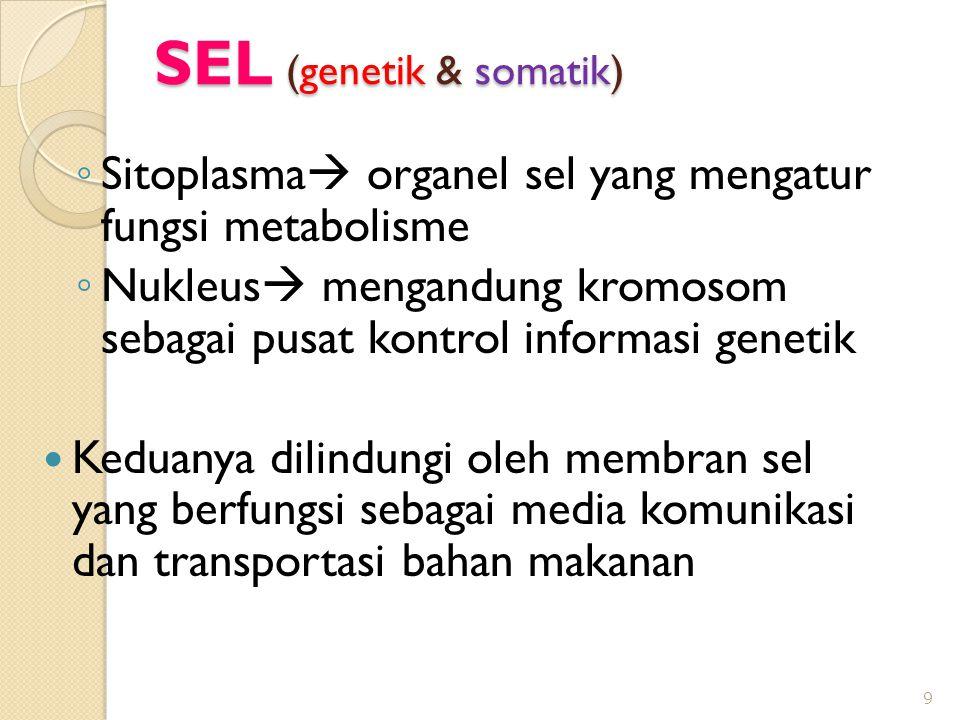 SEL (genetik & somatik) ◦ Sitoplasma  organel sel yang mengatur fungsi metabolisme ◦ Nukleus  mengandung kromosom sebagai pusat kontrol informasi genetik  Keduanya dilindungi oleh membran sel yang berfungsi sebagai media komunikasi dan transportasi bahan makanan 9