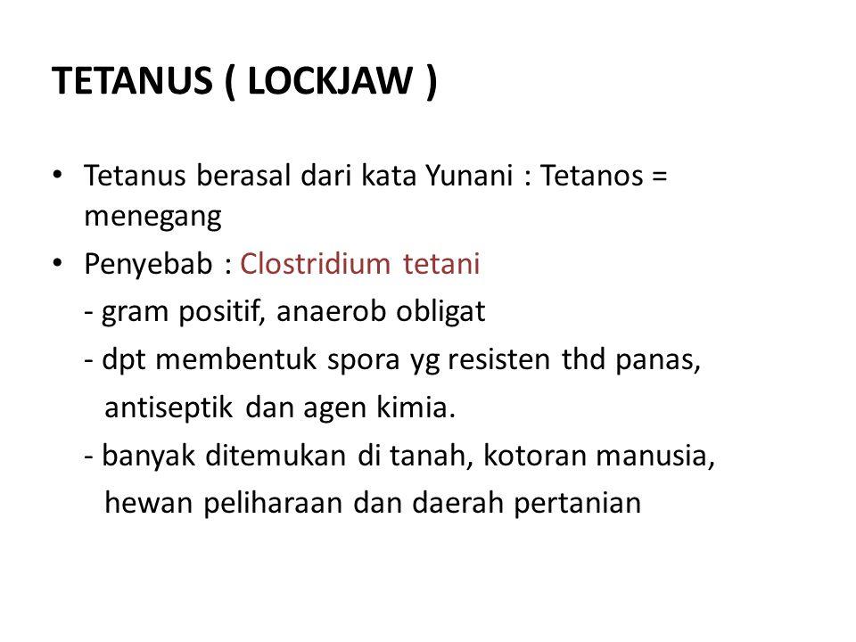 TETANUS ( LOCKJAW ) • Tetanus berasal dari kata Yunani : Tetanos = menegang • Penyebab : Clostridium tetani - gram positif, anaerob obligat - dpt memb