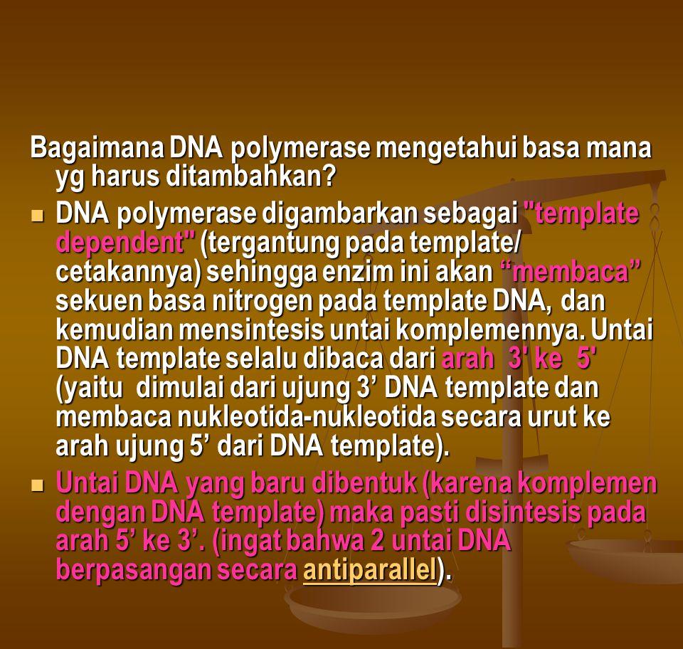 Bagaimana DNA polymerase mengetahui basa mana yg harus ditambahkan?  DNA polymerase digambarkan sebagai
