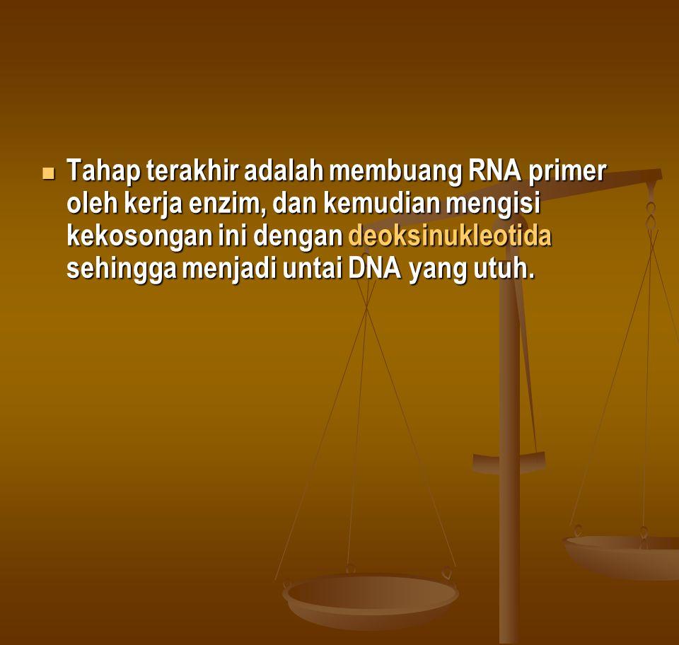  Tahap terakhir adalah membuang RNA primer oleh kerja enzim, dan kemudian mengisi kekosongan ini dengan deoksinukleotida sehingga menjadi untai DNA y