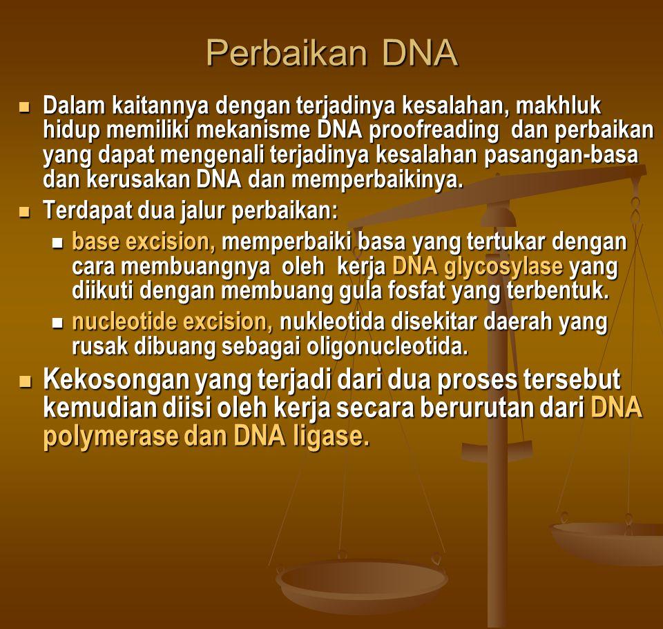 Perbaikan DNA  Dalam kaitannya dengan terjadinya kesalahan, makhluk hidup memiliki mekanisme DNA proofreading dan perbaikan yang dapat mengenali terj