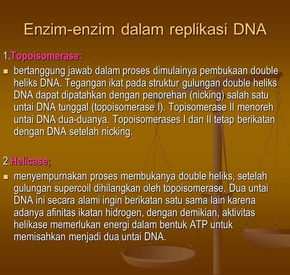 Enzim-enzim dalam replikasi DNA 1. Topoisomerase:  bertanggung jawab dalam proses dimulainya pembukaan double heliks DNA. Tegangan ikat pada struktur