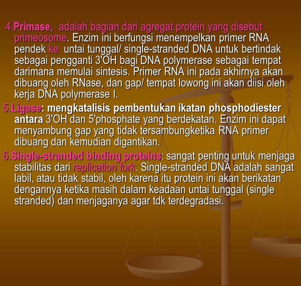 4. Primase, adalah bagian dari agregat protein yang disebut primeosome. Enzim ini berfungsi menempelkan primer RNA pendek ke untai tunggal/ single-str