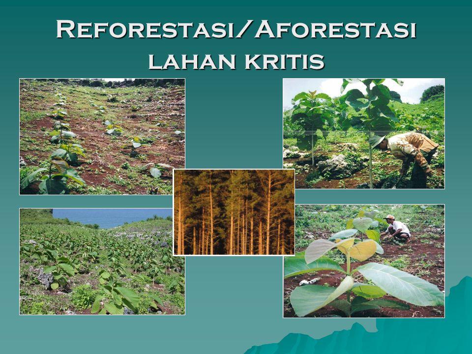 Reforestasi/Aforestasi lahan kritis