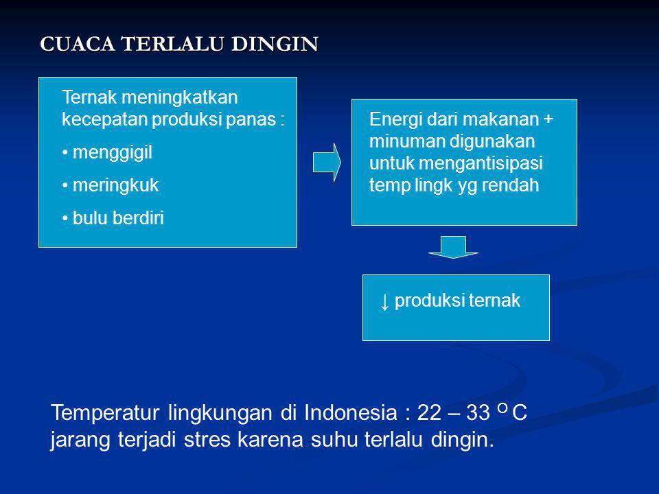 CUACA TERLALU DINGIN Ternak meningkatkan kecepatan produksi panas : • menggigil • meringkuk • bulu berdiri Energi dari makanan + minuman digunakan unt
