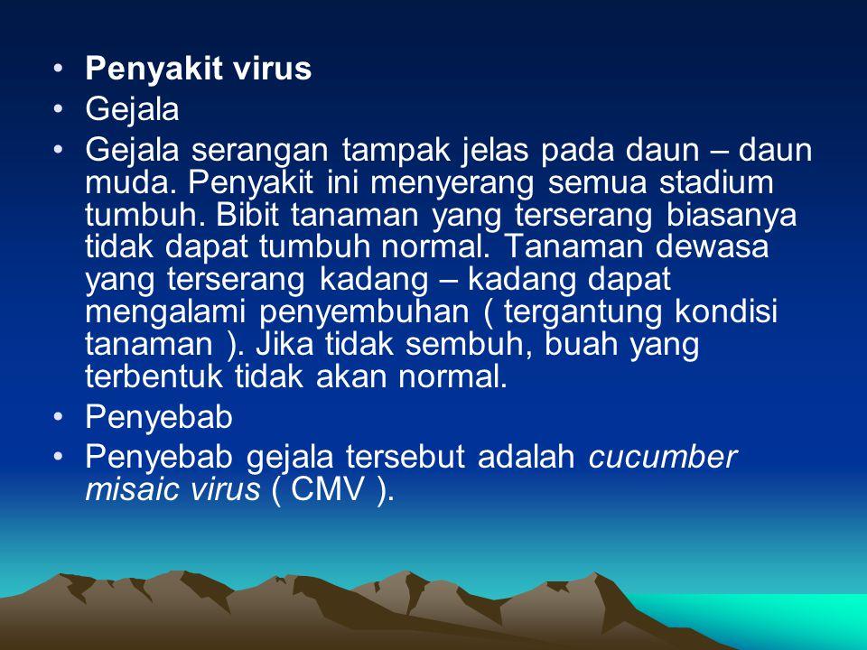 •Penyakit virus •Gejala •Gejala serangan tampak jelas pada daun – daun muda. Penyakit ini menyerang semua stadium tumbuh. Bibit tanaman yang terserang