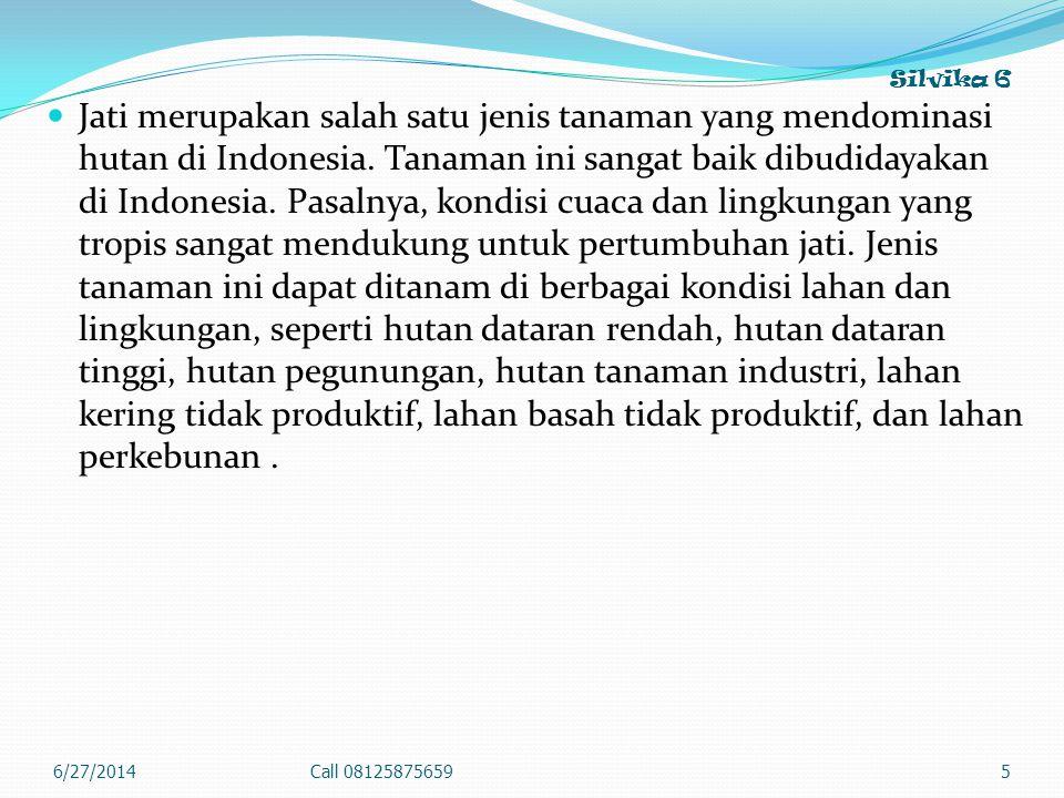 Silvika 6  Jati merupakan salah satu jenis tanaman yang mendominasi hutan di Indonesia. Tanaman ini sangat baik dibudidayakan di Indonesia. Pasalnya,