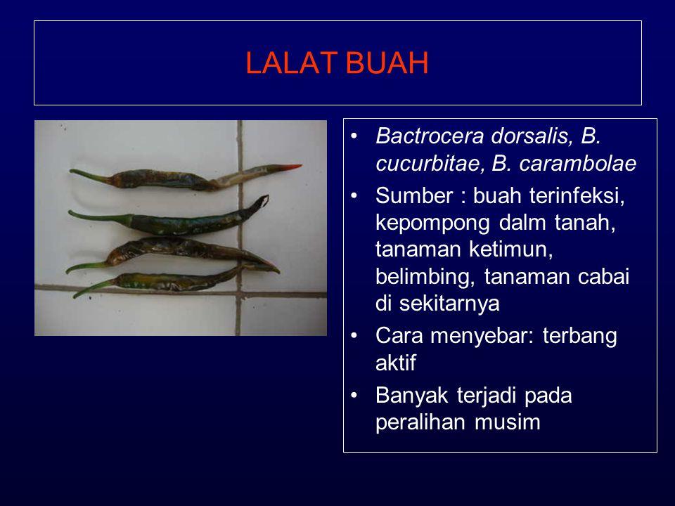 LALAT BUAH •Bactrocera dorsalis, B. cucurbitae, B. carambolae •Sumber : buah terinfeksi, kepompong dalm tanah, tanaman ketimun, belimbing, tanaman cab