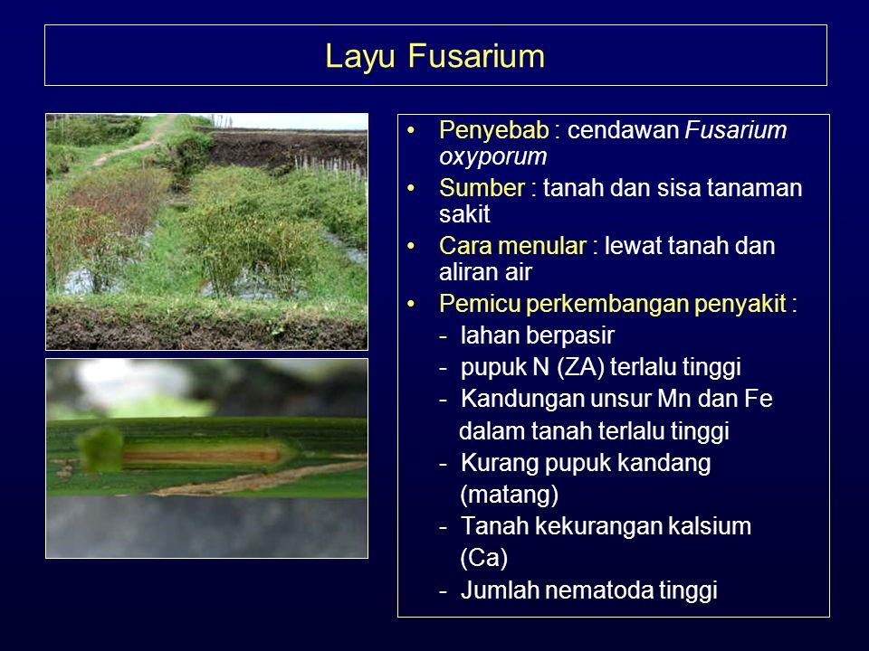Layu Fusarium •Penyebab : cendawan Fusarium oxyporum •Sumber : tanah dan sisa tanaman sakit •Cara menular : lewat tanah dan aliran air •Pemicu perkemb