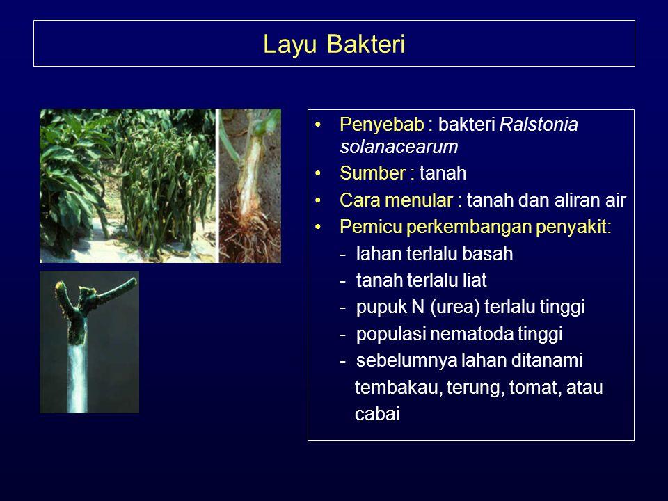 Layu Bakteri •Penyebab : bakteri Ralstonia solanacearum •Sumber : tanah •Cara menular : tanah dan aliran air •Pemicu perkembangan penyakit: - lahan te