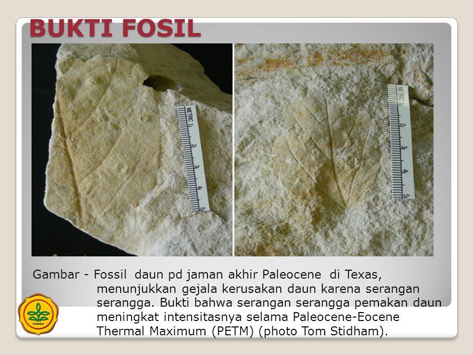 BUKTI FOSIL Gambar - Fossil daun pd jaman akhir Paleocene di Texas, menunjukkan gejala kerusakan daun karena serangan serangga. Bukti bahwa serangan s