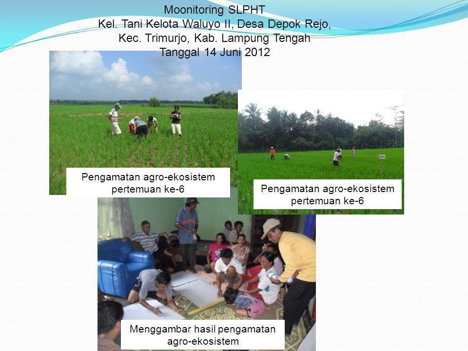 Moonitoring SLPHT Kel. Tani Kelota Waluyo II, Desa Depok Rejo, Kec. Trimurjo, Kab. Lampung Tengah Tanggal 14 Juni 2012 Pengamatan agro-ekosistem perte