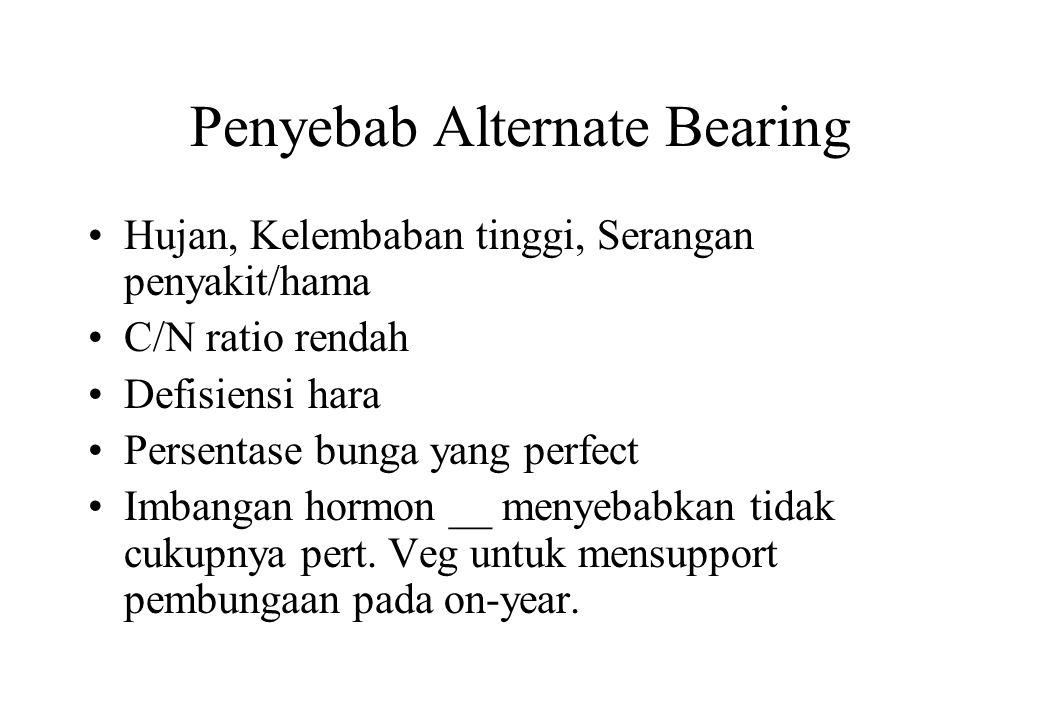 Penyebab Alternate Bearing •Hujan, Kelembaban tinggi, Serangan penyakit/hama •C/N ratio rendah •Defisiensi hara •Persentase bunga yang perfect •Imbang