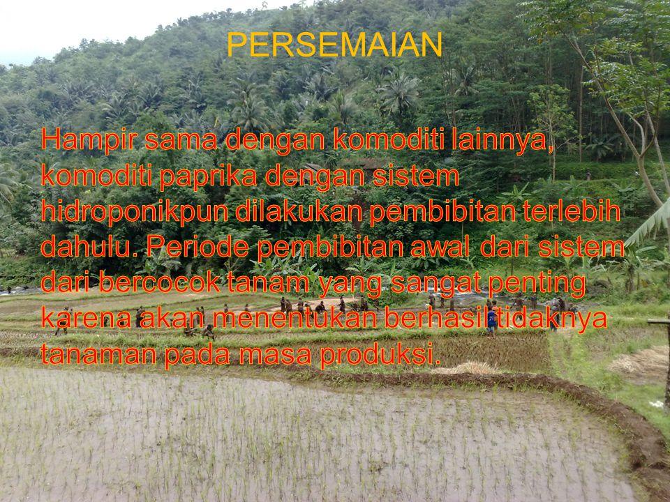 PERSEMAIAN