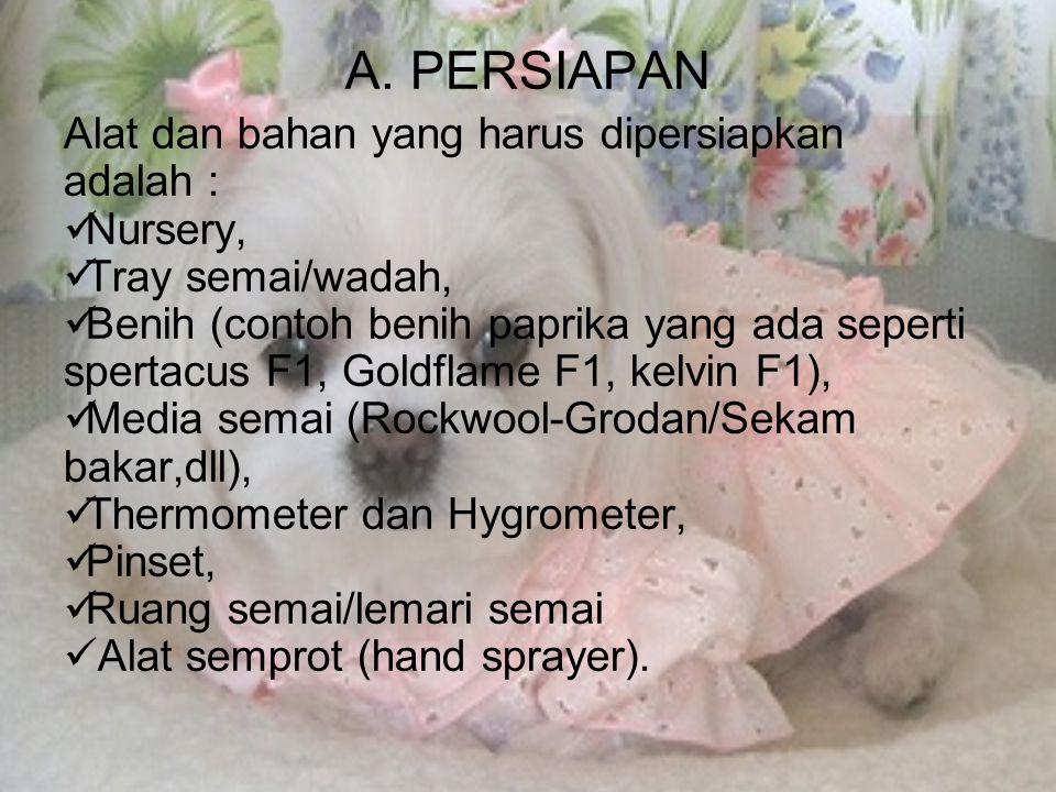 A. PERSIAPAN Alat dan bahan yang harus dipersiapkan adalah :  Nursery,  Tray semai/wadah,  Benih (contoh benih paprika yang ada seperti spertacus F