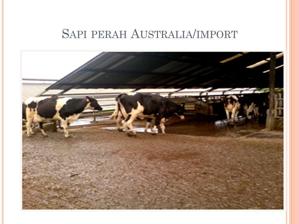 S API PERAH A USTRALIA / IMPORT