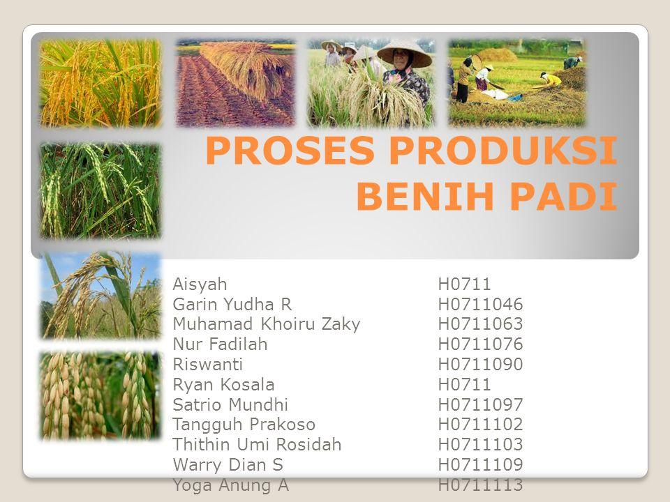 BUDIDAYA TANAMAN PADI Pemilihan Lokasi •Lahan untuk lokasi perbenihan sebaiknya lahan bera atau bekas pertanaman padi varietas yang sama.