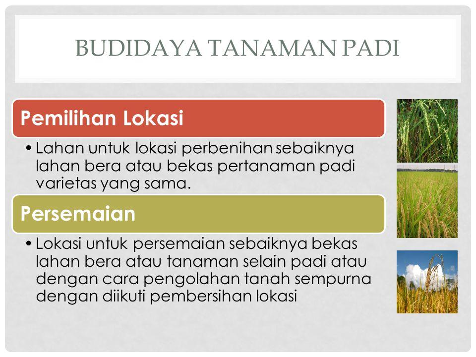 BUDIDAYA TANAMAN PADI Pemilihan Lokasi •Lahan untuk lokasi perbenihan sebaiknya lahan bera atau bekas pertanaman padi varietas yang sama. Persemaian •