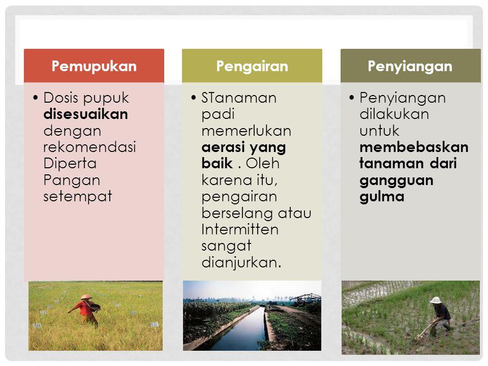 Pemupukan •Dosis pupuk disesuaikan dengan rekomendasi Diperta Pangan setempat Pengairan •STanaman padi memerlukan aerasi yang baik. Oleh karena itu, p