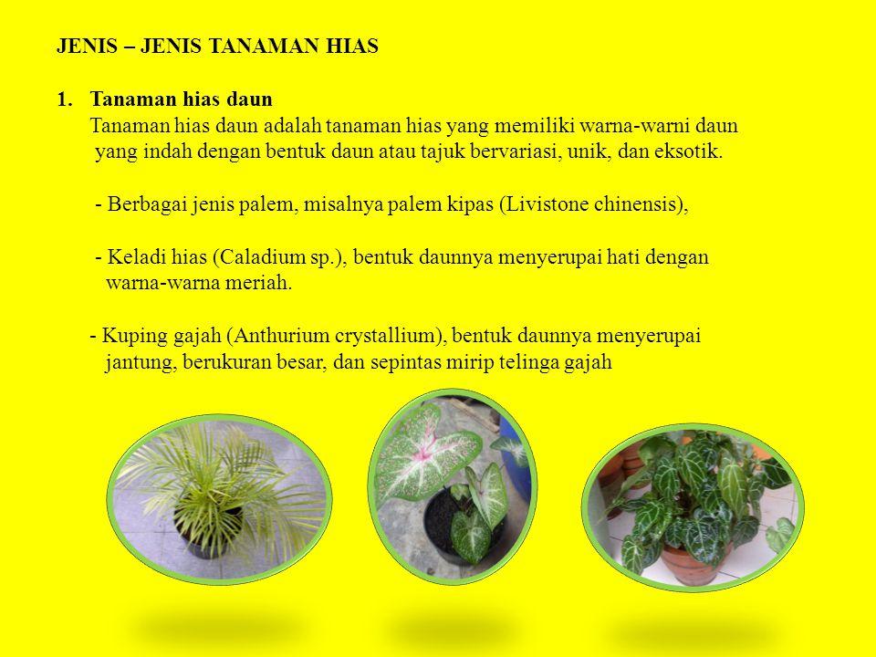 JENIS – JENIS TANAMAN HIAS 1.Tanaman hias daun Tanaman hias daun adalah tanaman hias yang memiliki warna-warni daun yang indah dengan bentuk daun atau tajuk bervariasi, unik, dan eksotik.