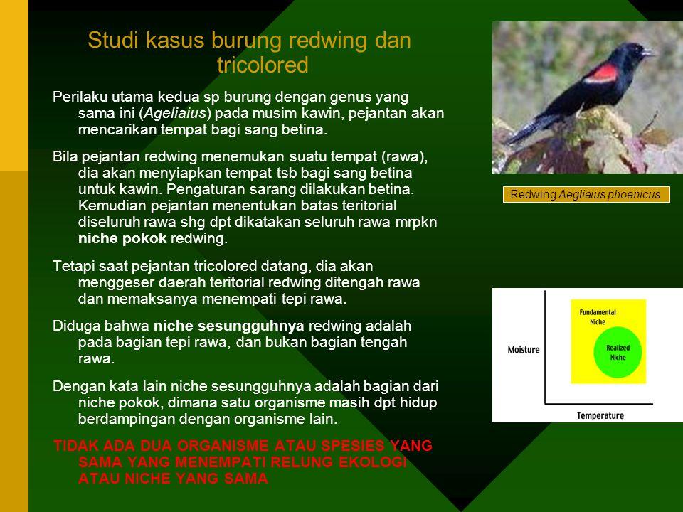 Studi kasus burung redwing dan tricolored Perilaku utama kedua sp burung dengan genus yang sama ini (Ageliaius) pada musim kawin, pejantan akan mencar