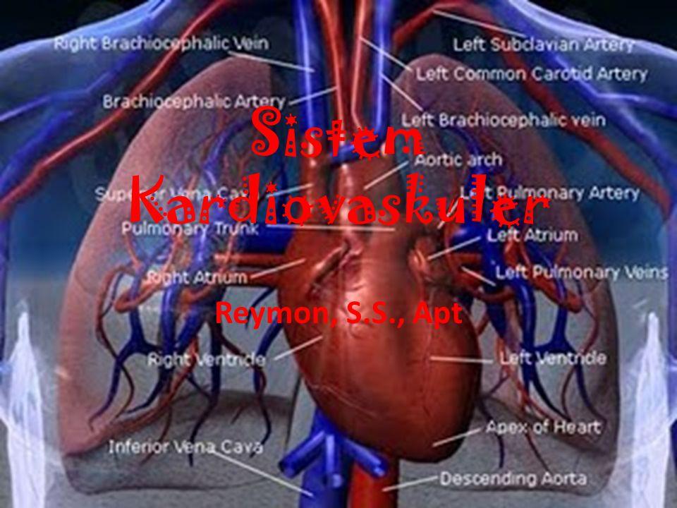 Sistem Kardiovaskuler Reymon, S.S., Apt